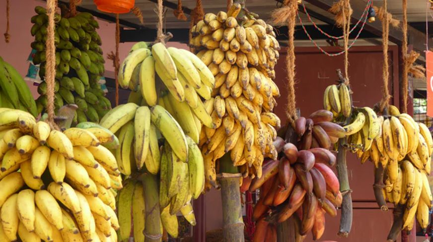 6 fruits mentioned in the Holy Quran and their benefits